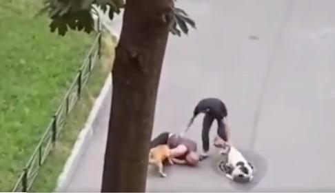 Dono de pet usa seu corpo como escudo para salvar seu animal de pitbulls