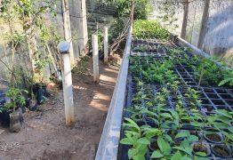 Prefeitura de Patos reativa viveiro de mudas de plantas frutíferas e árvores nativas