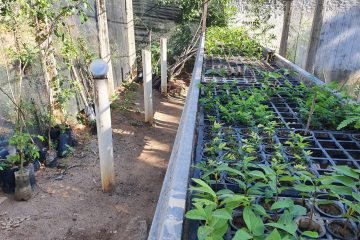 VIVEIRO 5 360x240 - Prefeitura de Patos reativa viveiro de mudas de plantas frutíferas e árvores nativas