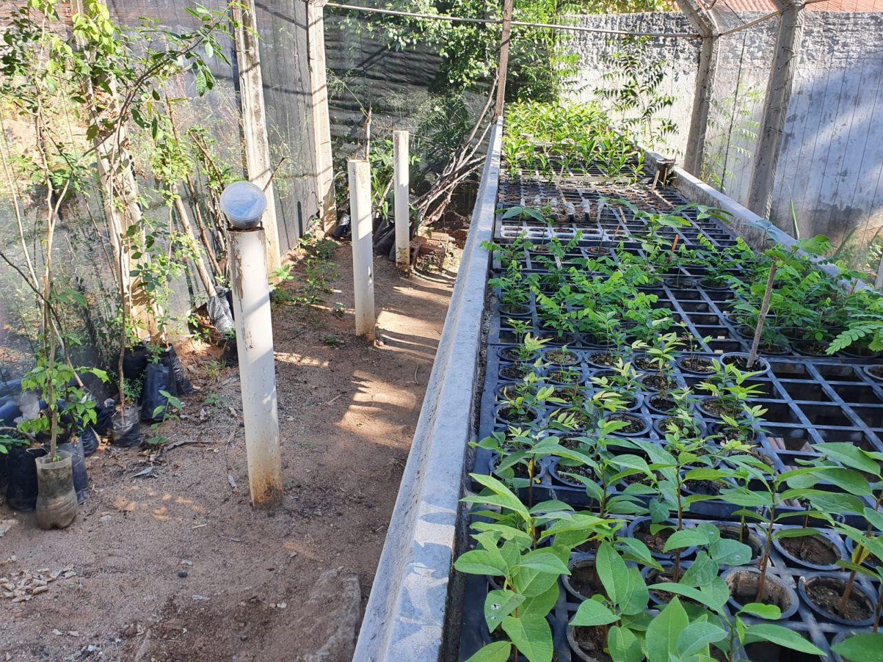 VIVEIRO 5 scaled - Prefeitura de Patos reativa viveiro de mudas de plantas frutíferas e árvores nativas