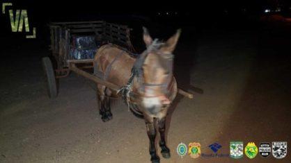 carroca com maconha 418x235 1 - Polícia Federal apreende burro com 300 kg de maconha