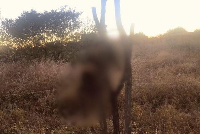 csm tortura animais 55c2b37b90 - Gatos são mortos 'crucificados' no Sertão da Paraíba