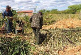 Prefeitura de Patos auxilia na produção de silagem na comunidade do Mocambo