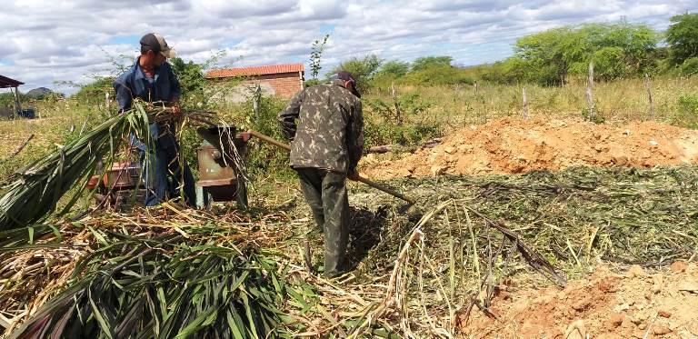 silagem 2 - Prefeitura de Patos auxilia na produção de silagem na comunidade do Mocambo