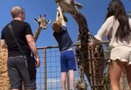Criança tenta alimentar girafa e fica pendurada no ar – VEJA VÍDEO