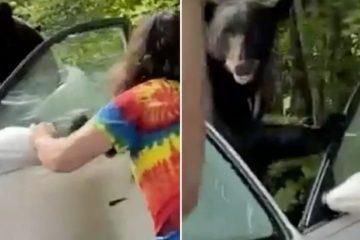 Homem abre porta para urso que ficou preso dentro de carro