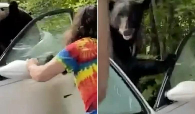 uerr - Homem abre porta para urso que ficou preso dentro de carro