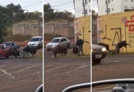 Porco derruba e morde motoboy durante entrega em São Paulo