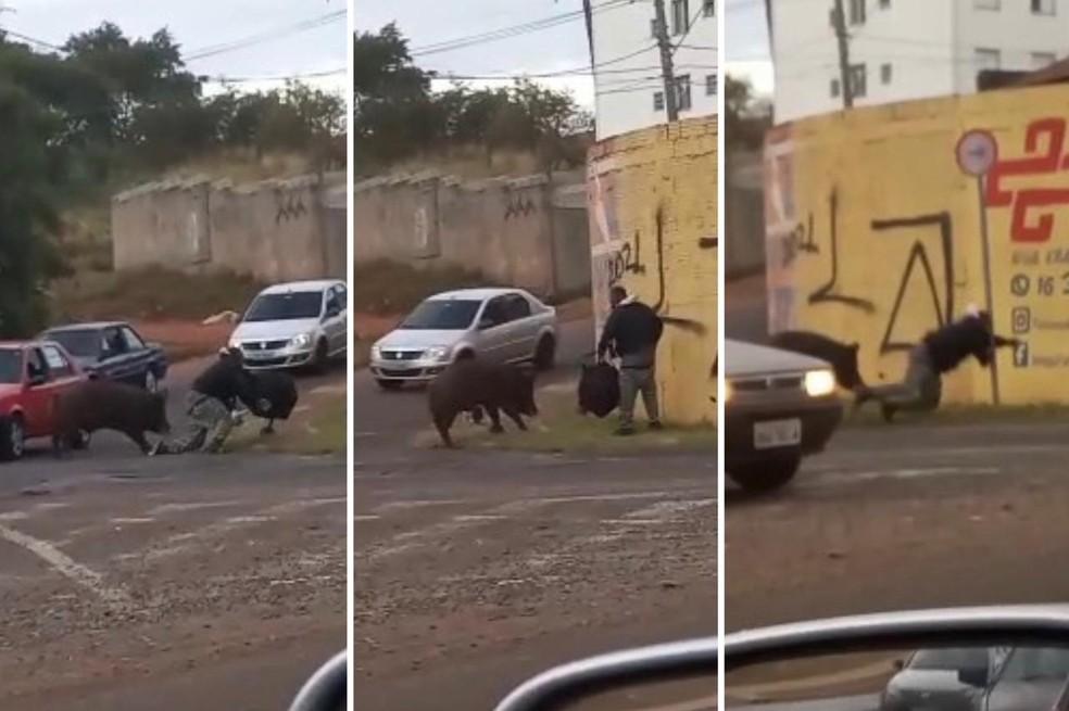 whatsapp image 2021 07 19 at 17.20.16 - Porco derruba e morde motoboy durante entrega em São Paulo