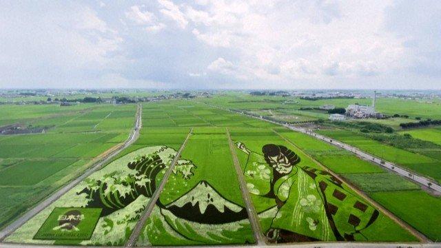 xblog rice.jpg.pagespeed.ic .rdequDQjBZ 1 - Cidade japonesa transforma arrozais em obras de arte para homenagear Jogos Olímpicos