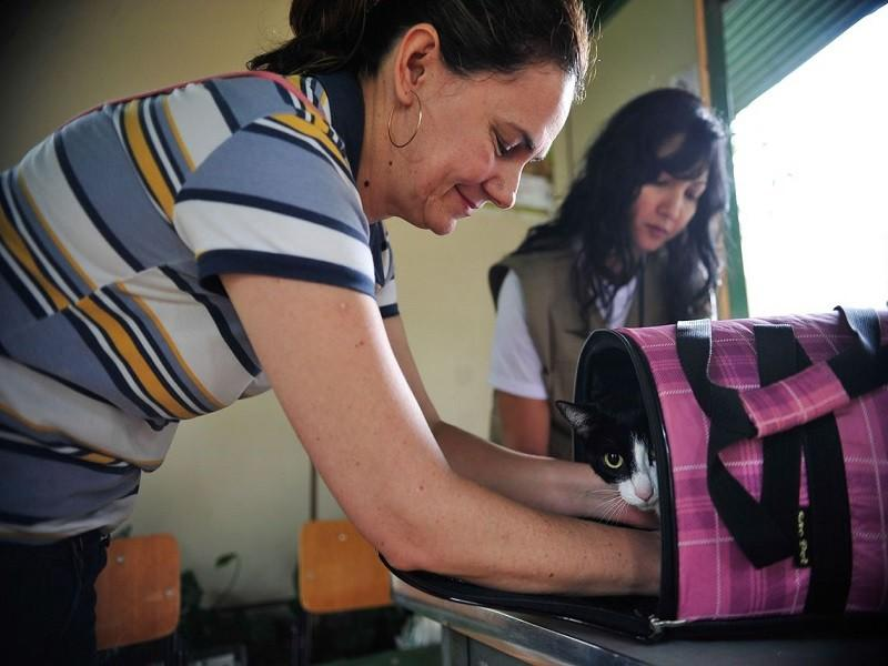 905011 vacina caes gatos df 7634 - Evento em Campina Grande promove adoção de animais e vacinação antirrábica