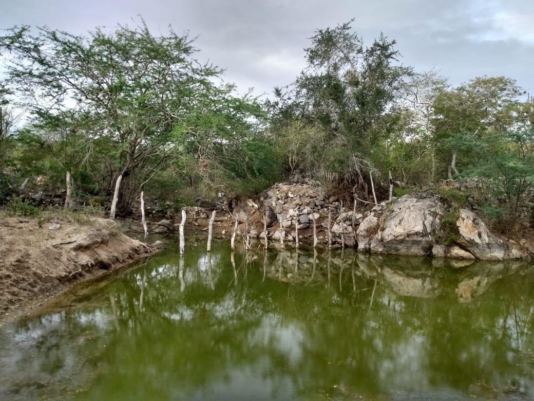 a11db900e4560c198470c992f8809798 - Recuperação de nascentes vai ajudar comunidades agrícolas em Campina Grande