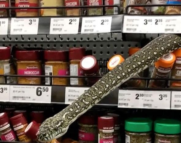 cobra mercado - Mulher encontra cobra de três metros em prateleira de supermercado - VEJA VÍDEO