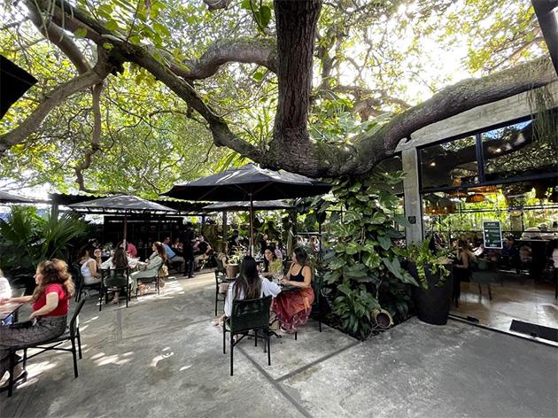 """gar21 arvore - Restaurante de João Pessoa, Reserve Garden, é destaque na Folha de São Paulo: """"oásis verde de boa gastronomia"""""""