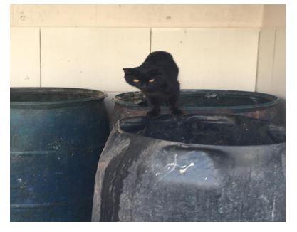 gatos - DIREITO À ALIMENTAÇÃO: 22 gatos entram na Justiça com pedido de liminar contra condomínio em João Pessoa; VEJA VÍDEO