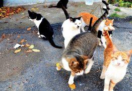 DIREITO À ALIMENTAÇÃO: 22 gatos entram na Justiça com pedido de liminar contra condomínio em João Pessoa; VEJA VÍDEO
