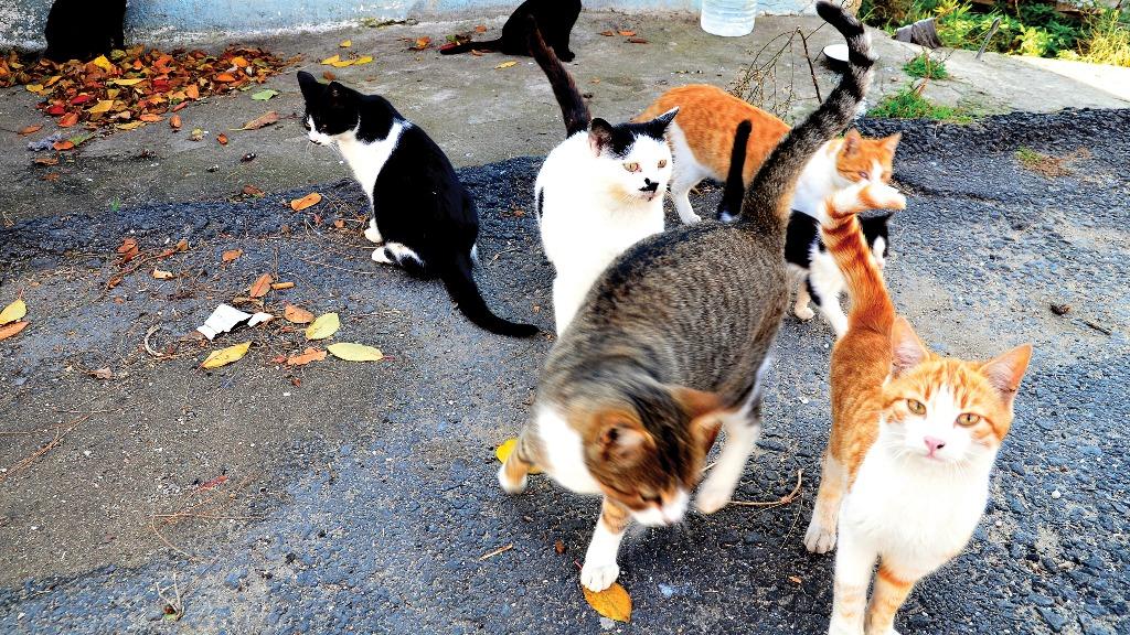 gatos rua 1024x576 04082020195422 - Não podem ser parte do processo: Justiça extingue ação movida por 22 gatos na Paraíba