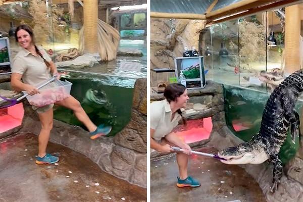 the reptile zoo - Vídeo mostra jacaré gigante saltando de tanque e surpreendendo tratadora