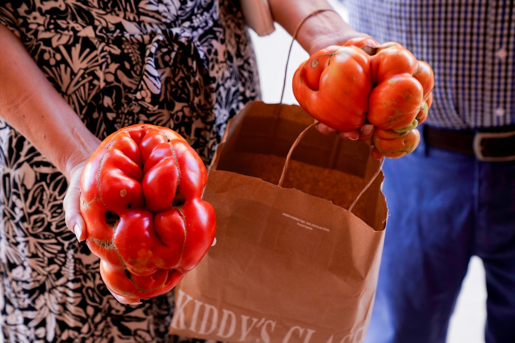 2021 09 12t151036z 498078046 rc28op95r7x8 rtrmadp 3 spain uglytomato 1  - Agricultores competem pelo título de 'tomate mais feio' na Espanha