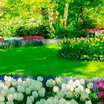 WhatsApp Image 2021 09 22 at 17.03.23 150x150 - EQUINÓCIO DE PRIMAVERA: Saiba quais a mudanças devem acontecer nos próximos três meses na estação das flores