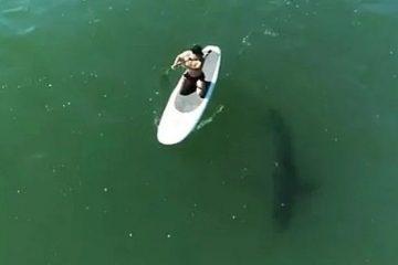 csm Orlando Bloom e cercado por tubarao enquanto surfava em Malibu Reproducao Instagram 44e8deacb2 360x240 - Orlando Bloom é cercado por tubarão enquanto surfava em Malibu