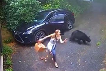 mulher foge de urso ao abrir porta de carro 1632406298449 v2 450x337 360x240 - Mulher abre porta do carro e acha urso no banco do motorista