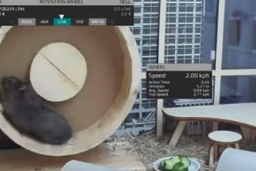 Hamster vira 'trader' de criptomoedas e obtém desempenho melhor que mercado de ações