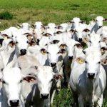 Autoridades do Brasil identificaram caso de vaca louca atipica em animal de Minas Gerais 150x150 - Veto chinês à carne brasileira já dura seis semanas e repercute no exterior