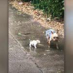VAC478 150x150 - Cachorrinha encontra gatinho perdido na chuva e o leva para casa
