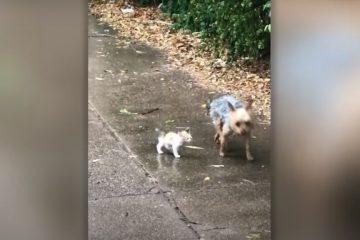 VAC478 360x240 - Cachorrinha encontra gatinho perdido na chuva e o leva para casa