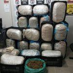 maconha 150x150 - Pai e filho são presos por suspeita de armazenar 200 kg de maconha em casa