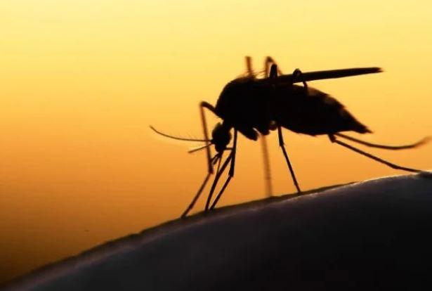 malaria - Pela primeira vez, OMS autoriza vacinação contra malária em crianças