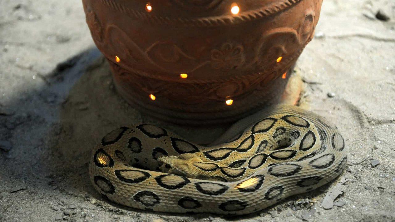 naom 6166b0b34f162 1 scaled - Homem é condenado a prisão perpétua por matar esposa com cobra