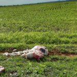 whatsapp image 2019 12 19 at 21.25.39 e1634850277745 150x150 - DESESPERO E CRISE: Criminosos abatem vaca e furtam a carne em fazendas do sertão paraibano, proprietários reclamam da insegurança - VEJA VÍDEO