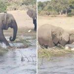 xblog elephant.jpg.pagespeed.ic .4pBjOEDxJ5 150x150 - Mamãe elefanta esmaga crocodilo até a morte após ter filhotes ameaçados